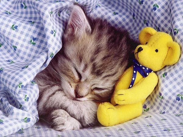 belles images animaux chats 2