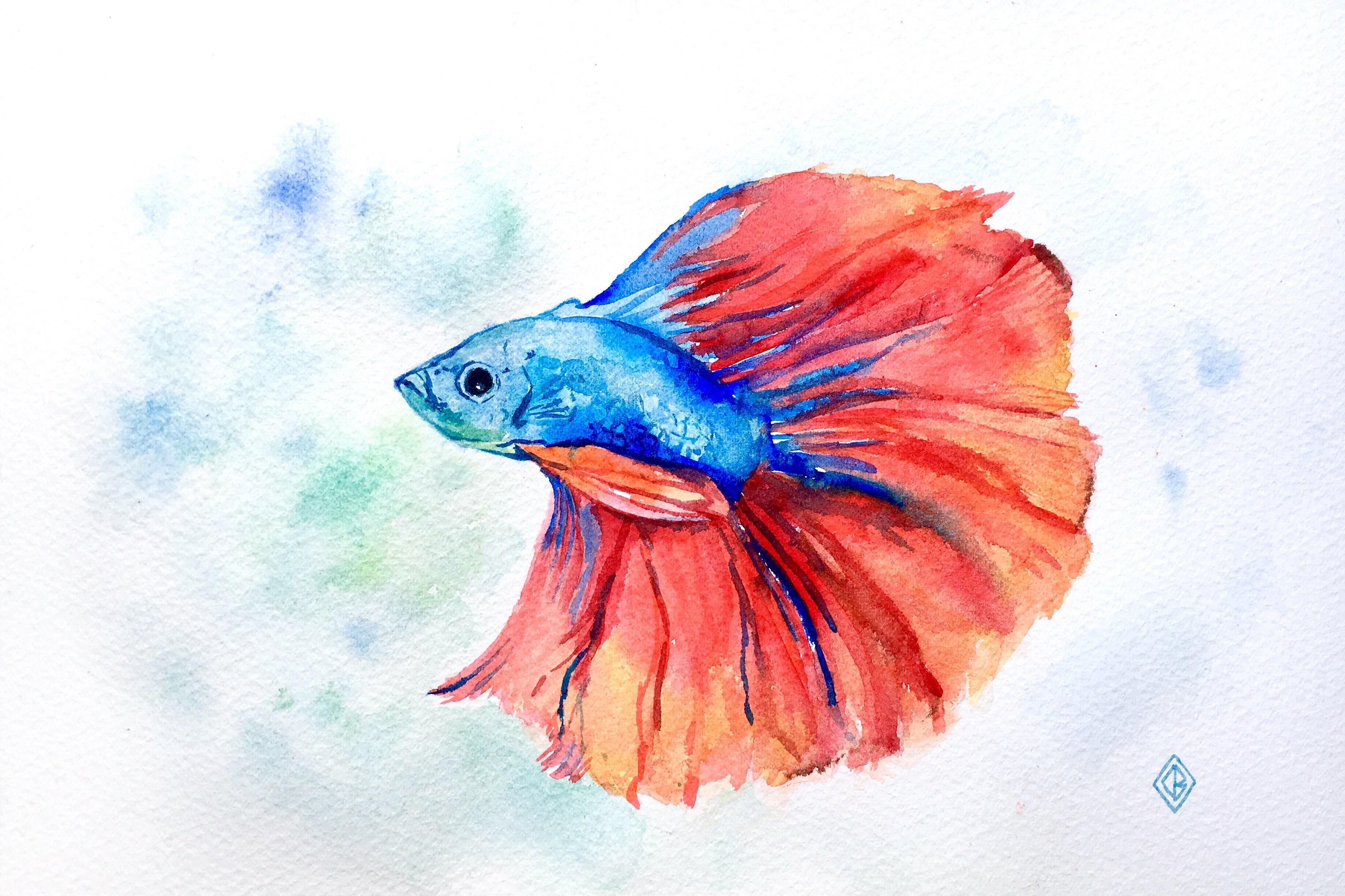 Betta Fish Watercolor 6x9 Https Ift Tt 2lnbi2t Watercolor Fish