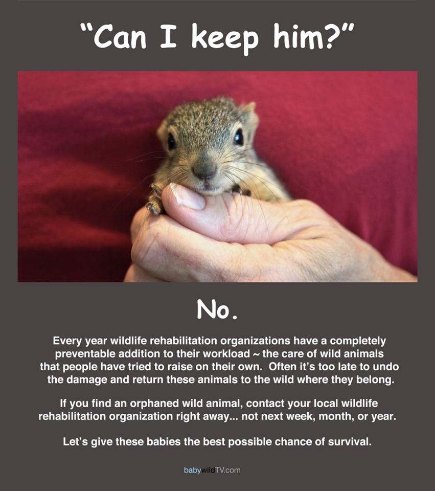Pin By Bobbie Coker On Squirrels Wildlife Rehabilitation Wildlife Education Wildlife Infographic