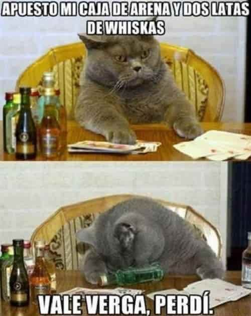 Los Mas Chistosos Memes De Gatos Meme Gato Memes De Gatos Graciosos Gatos