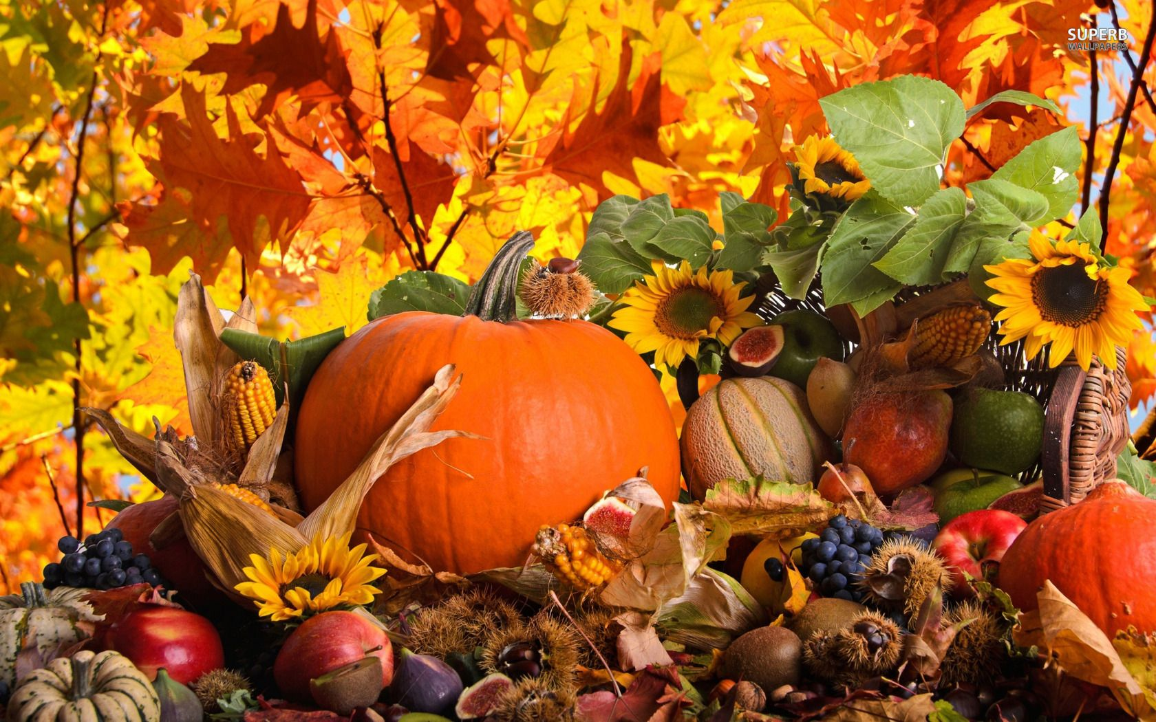 Download Fall Harvest Background For Iphone Pc Desktop Android Or Mac Iphone Nature Pumpkin Wallpaper Thanksgiving Wallpaper Free Thanksgiving Wallpaper