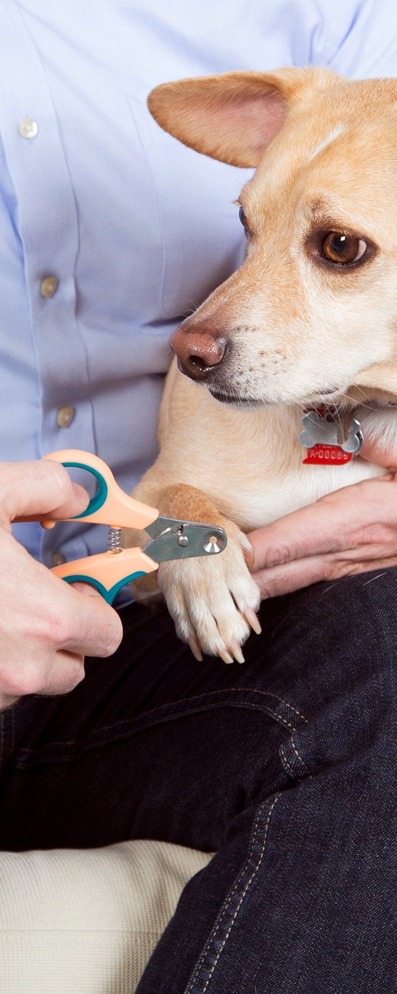Zen Clipper Safety Pet Nail Clipper Pets, Happy animals