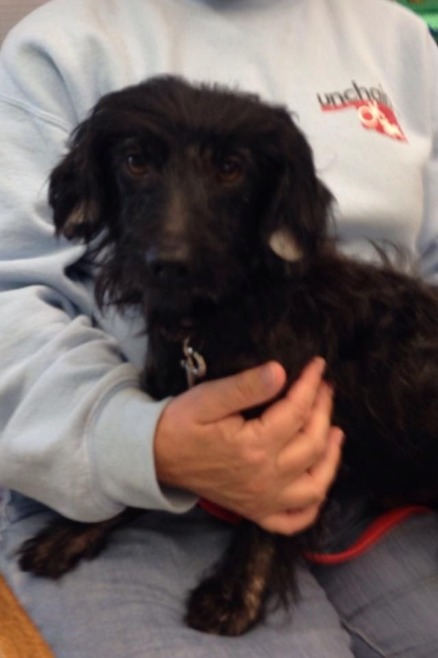 Adopt Otto On Dachshund Mix Little Dogs Dachshund