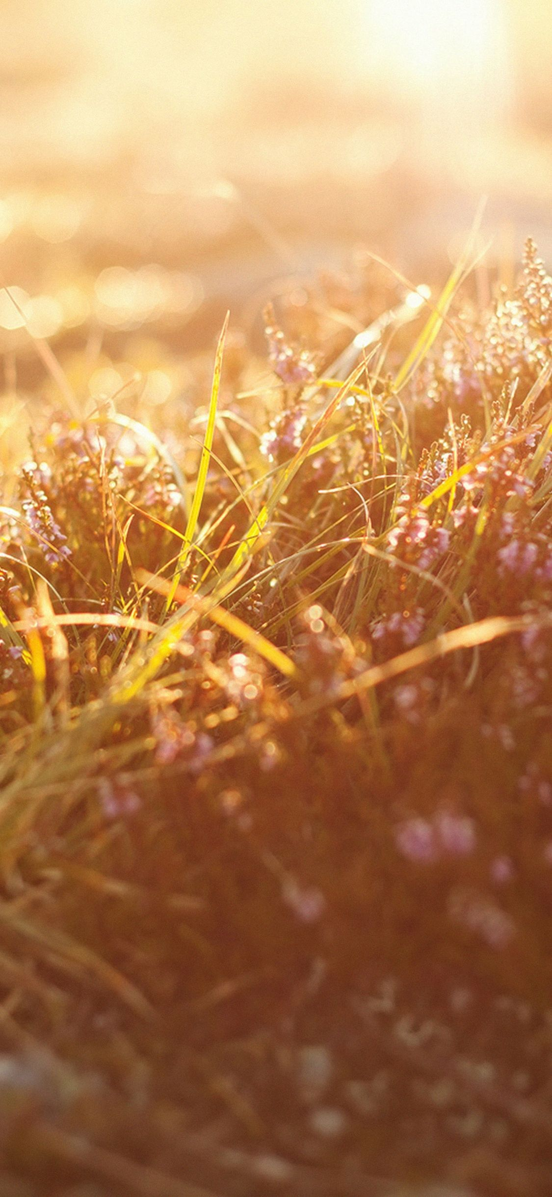 Sun Rise Flower Grass Love Nature Iphone X Wallpaper