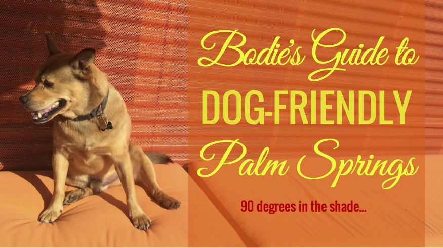 Bodie S Guide To Dog Friendly Palm Springs With Images Dog Friends Palm Springs Palm Springs California
