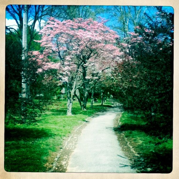 Spring time in Everhart Park.