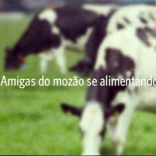 Haha #vacas