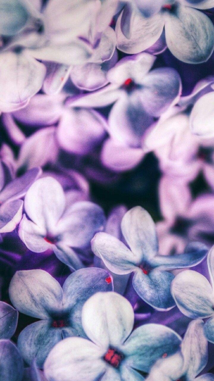 Tumblr iphone wallpaper purple -  Iphone Wallpaper Flower Flowers Pink Phone7 Purple Tumblr