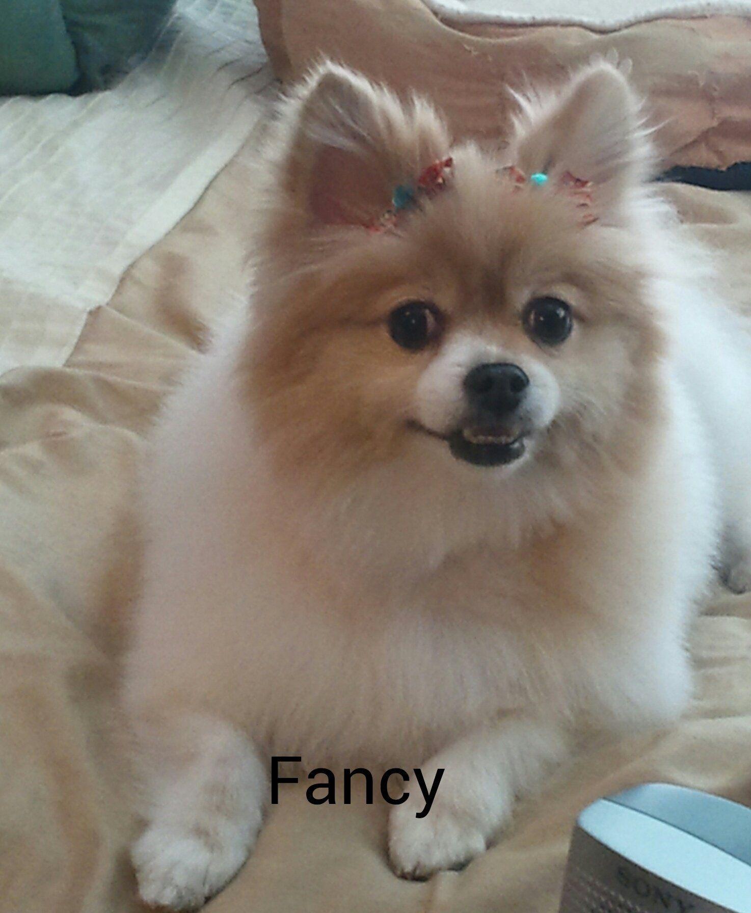 Lol Them Teeth Tho Pompom Pomeranians Huskys And Pomskys
