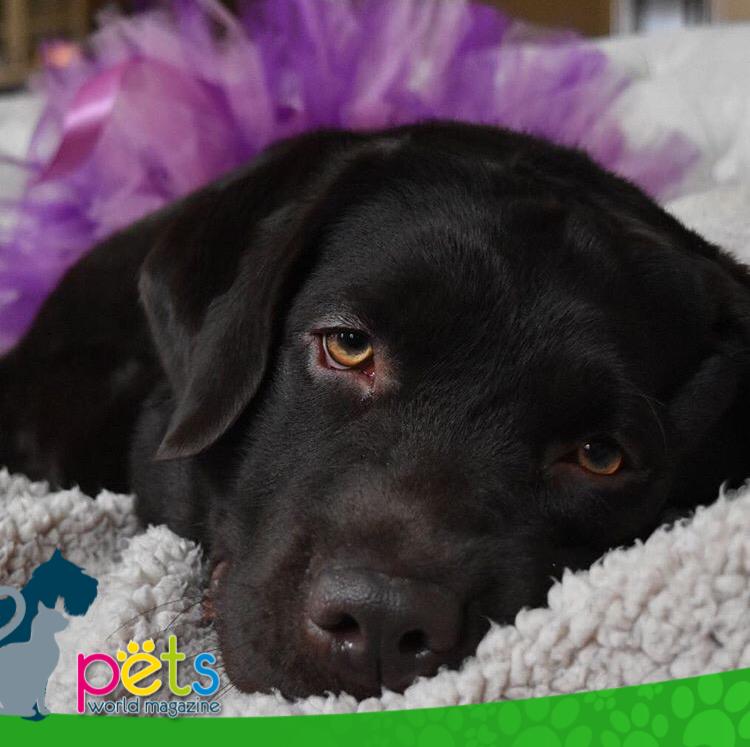 Buenas noches amig@s 🌙  #PetsWorldMagazine #RevistaDeMascotas #Panama #Mascotas #MascotasPanama #MascotasPty #PetsMagazine #MascotasAdorables #Perros #PerrosPty #PerrosPanama #Pets #PetsLovers #Dogs #DogLovers #DogOfTheDay #PicOfTheDay #Cute #SuperTiernos