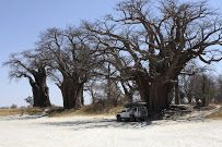 Baobab trees, Botswana - Google Maps.