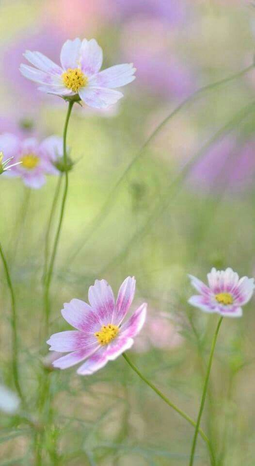 Épinglé par Loun sur Botanique | Fleurs sauvages, Belles ...