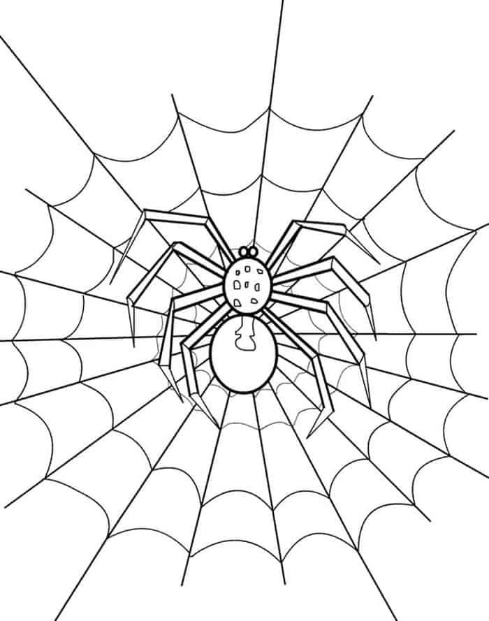 Huge Collection Of Spider Coloring Page in 2020 | Spider ...