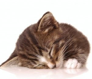 How to Care for a Sick Kitten at Home