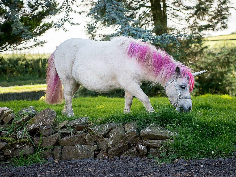 Are unicorns real unicorn images unicorn animals