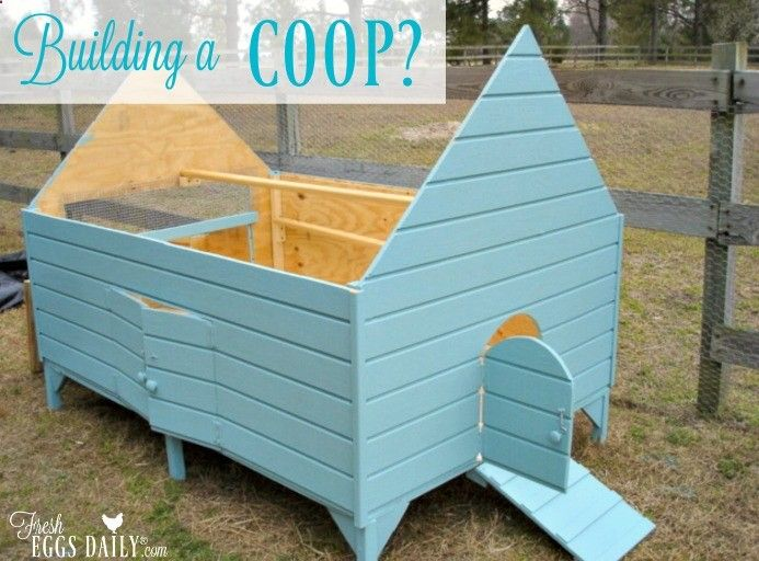 Thinking about building a chicken coop in your backyard  Here 39 s what. Thinking about building a chicken coop in your backyard  Here 39 s
