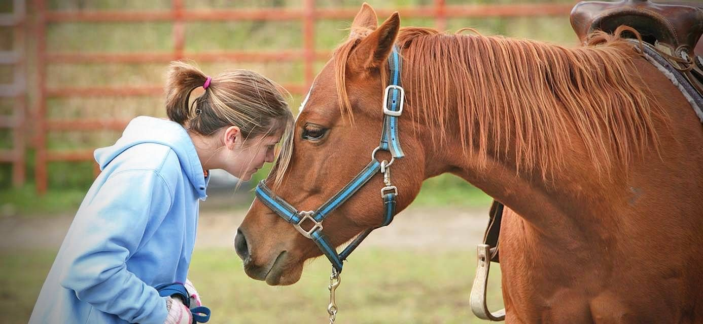 Why Equine Assisted Therapy Works Therapy Equine Therapy Talk Therapy