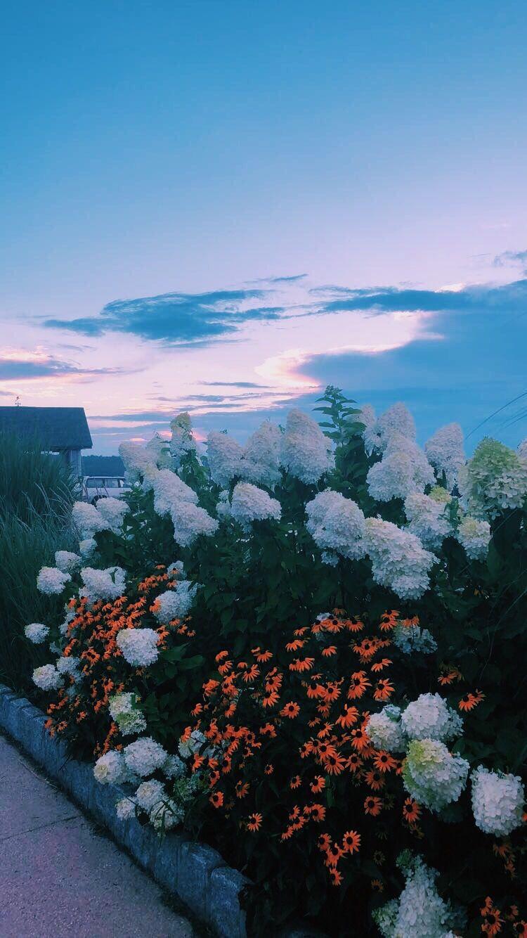 Pinterest voguesmoothie Instagram giannasegura Flower