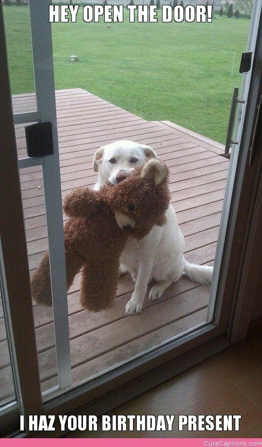 Hey Open the Door!, I Haz Your Birthday Present