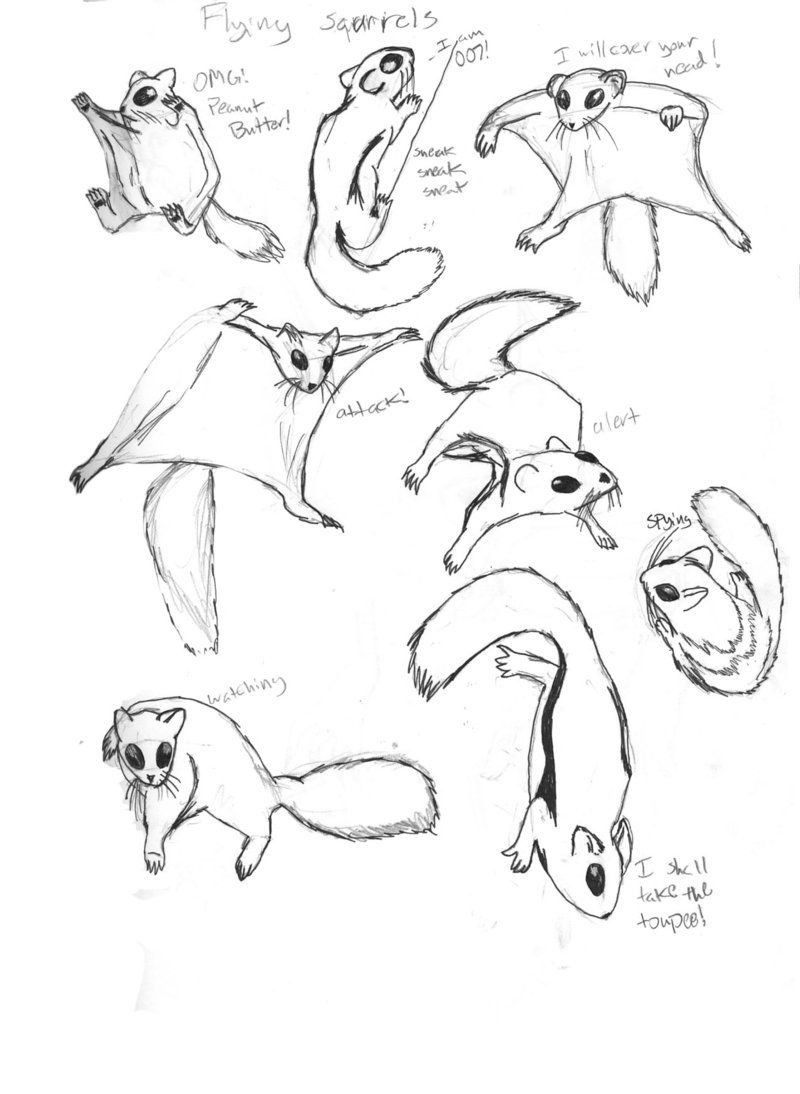 Flying Squirrels By Unionblack Squirrel Illustration Flying Squirrel Drawings