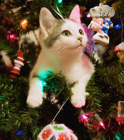 25 cats in, on and under Christmas trees #photos #cats #Christmas    Christmas cats, Cat christmas tree, Christmas animals