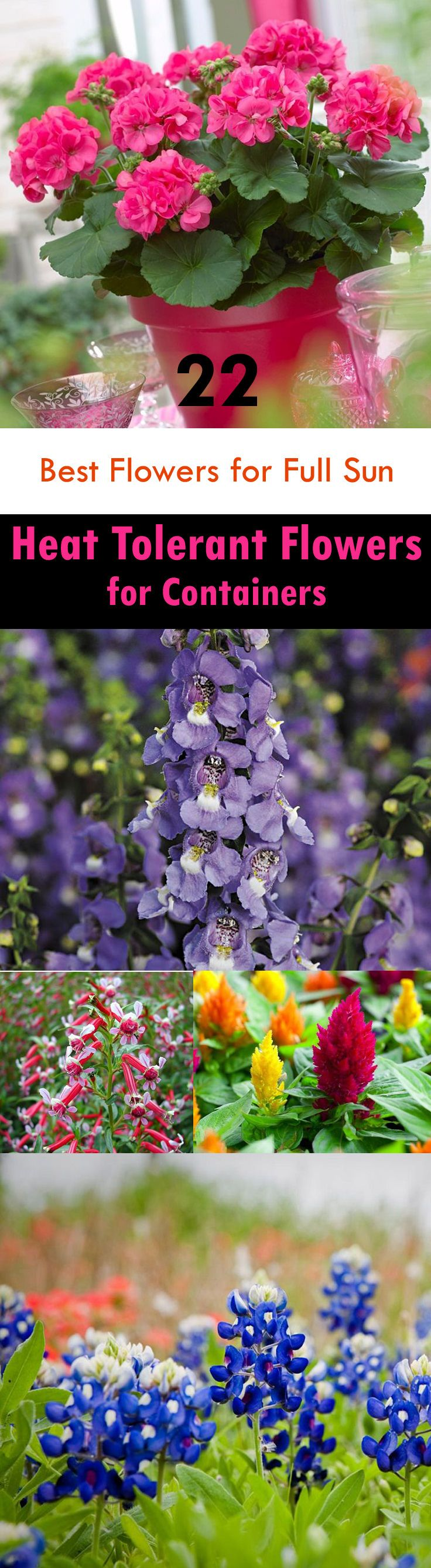 22 Best Flowers For Full Sun Heat Tolerant Flowers For Containers Heat Tolerant Flowers Full Sun Flowers Heat Tolerant Plants