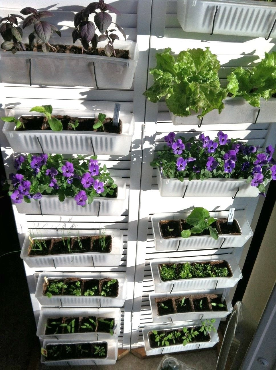 DIY Vertical Kitchen garden & seed starting trays. Single repuposed bi-fold shuttered closet door and dollar store container trays. Materials used and the how Mom did it on Teen Craft Connection's page.
