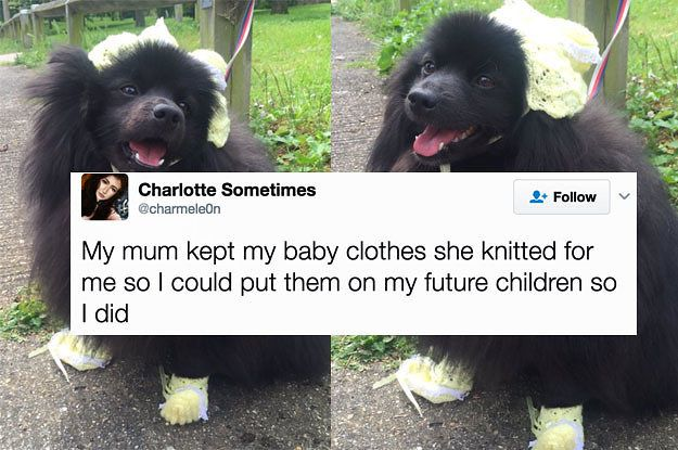 100 Hilarious Tweets About Dogs That Ll Definitely Make You Laugh