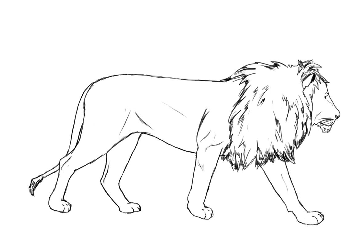 How To Draw A Lion | Paper drawing, Pencil eraser and How to draw