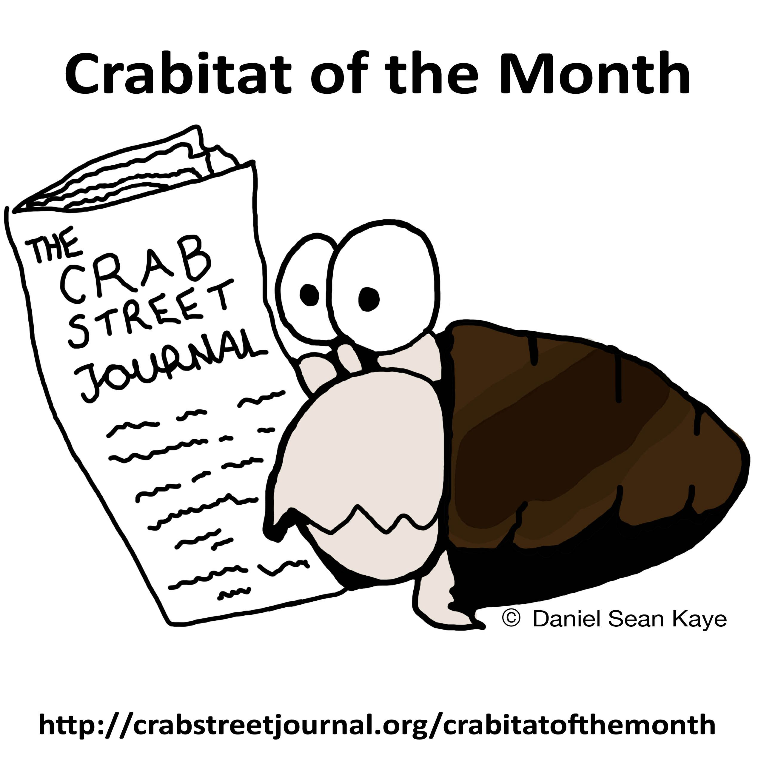 A monthly contest for hermit crab habitats! | All About Hermit Crabs ...