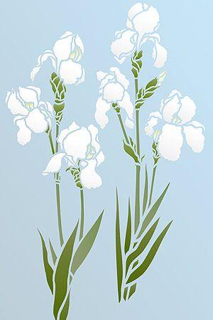 little-iris-g11.jpg (300×450)