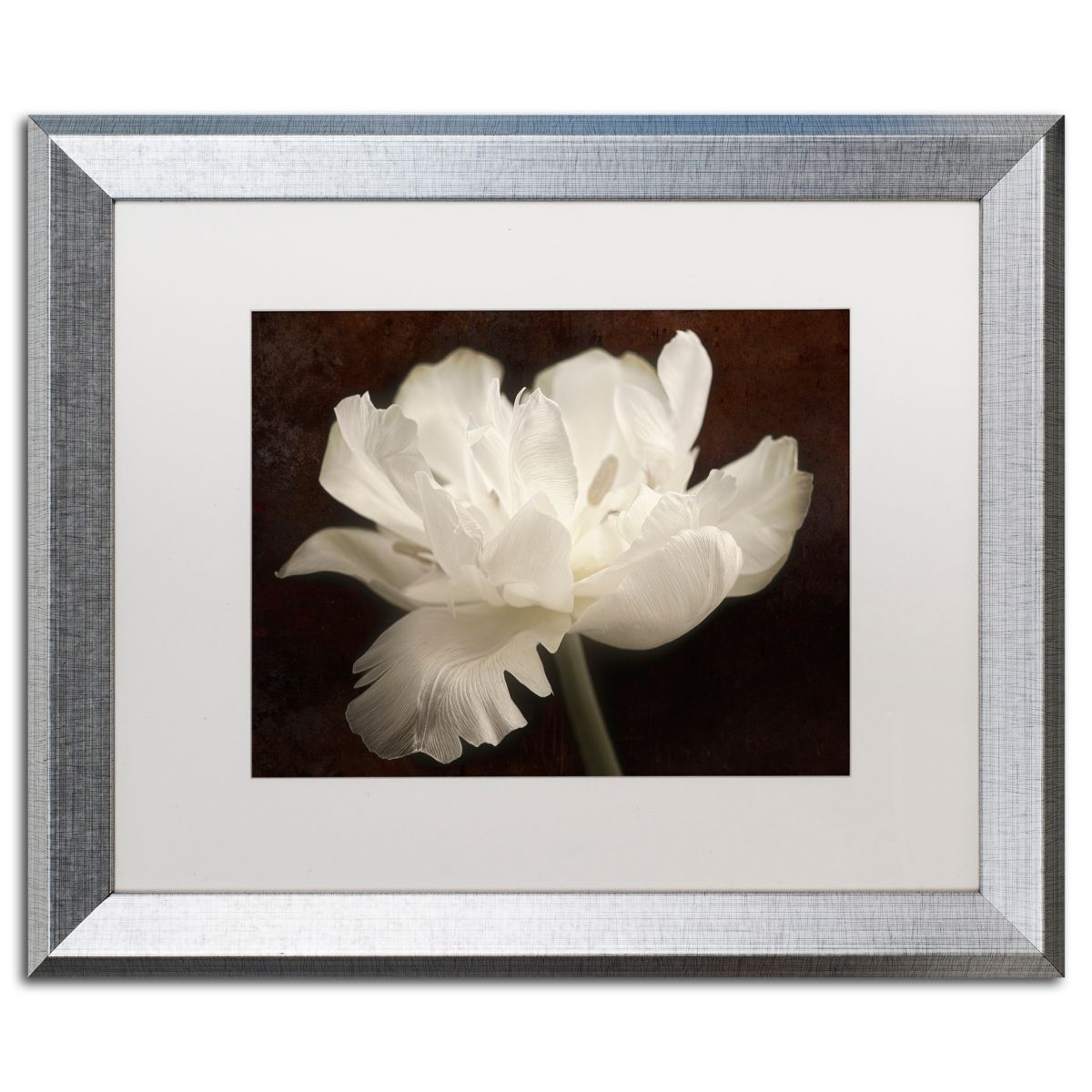Cora Niele White Tulip Ii Matted Framed Art 16 X 20 Open Misce With Images Framed Art White Tulips Trademark Fine Art