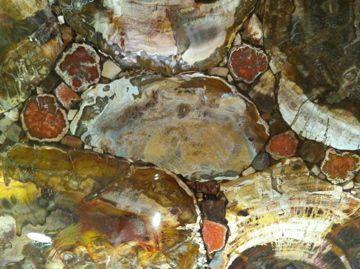 Granite Slab Or Petrified Wood Granite Slab Petrified Wood Granite