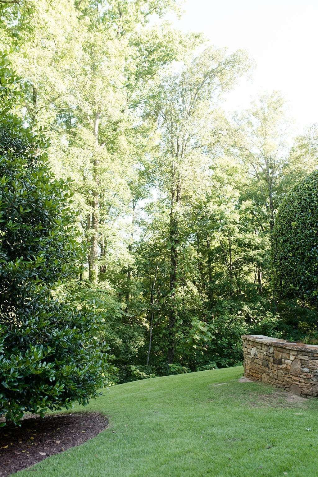 A Tour of my Yard & Privacy Trees for Backyard I recommend ...