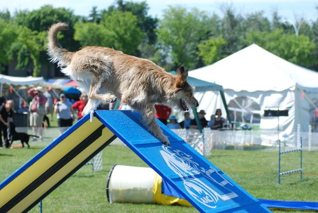 Dynamo Dog Sport Has Trained And Worked With Several Human Dog Teams That Have Competed In International Agility Competitions Sporting Dogs Dog Training Dogs