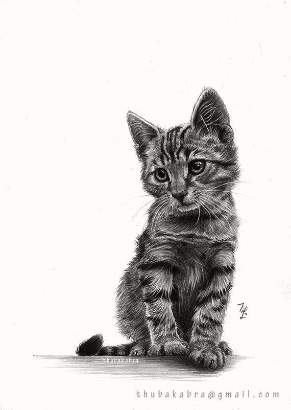 Kitten Print Of A Graphite Pencil Drawing By Drawingillustration