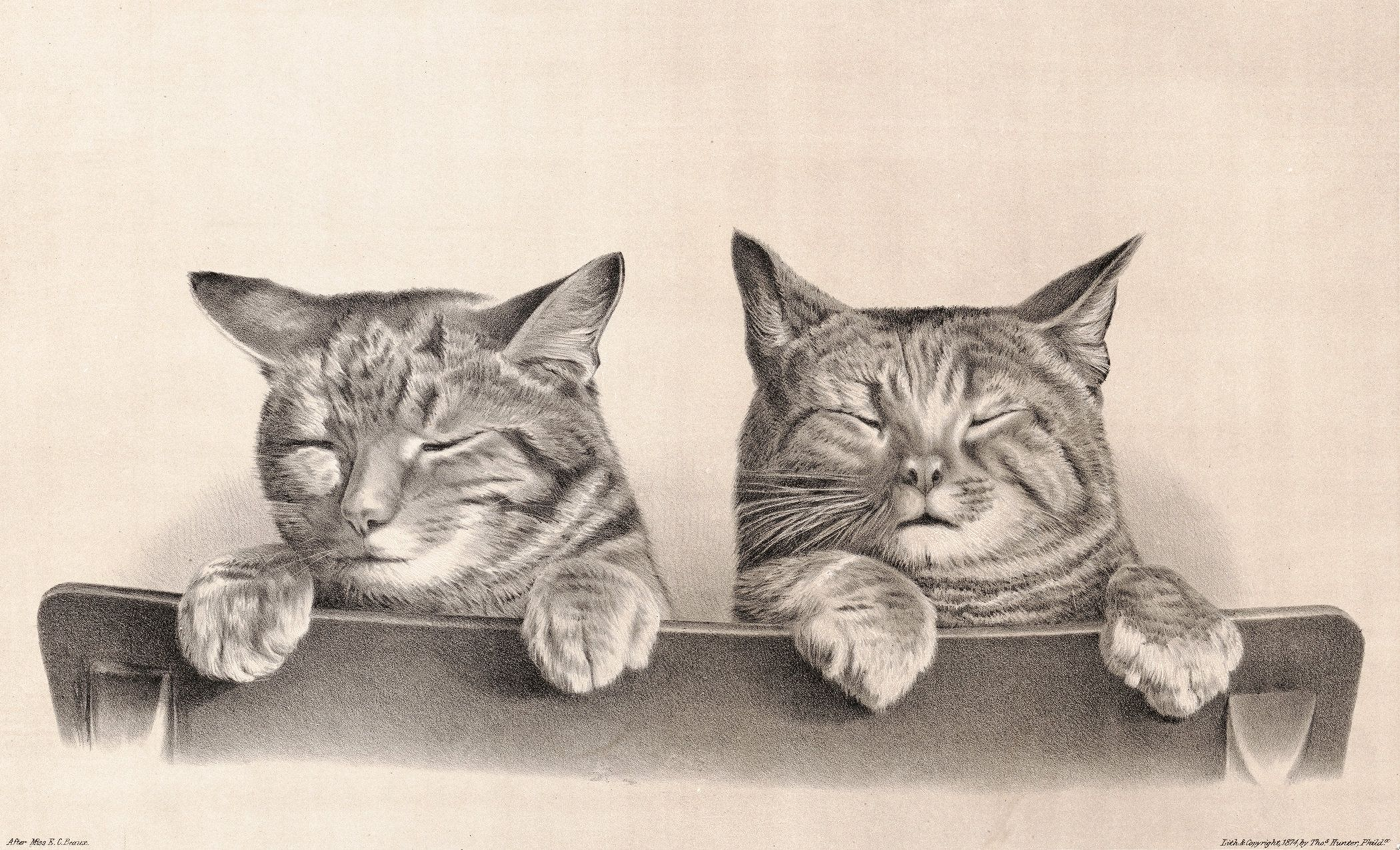 Vintage Cat Illustration Of Sleeping Cats Digital Download Etsy In 2020 Baby Cats Cats Sleepy Cat