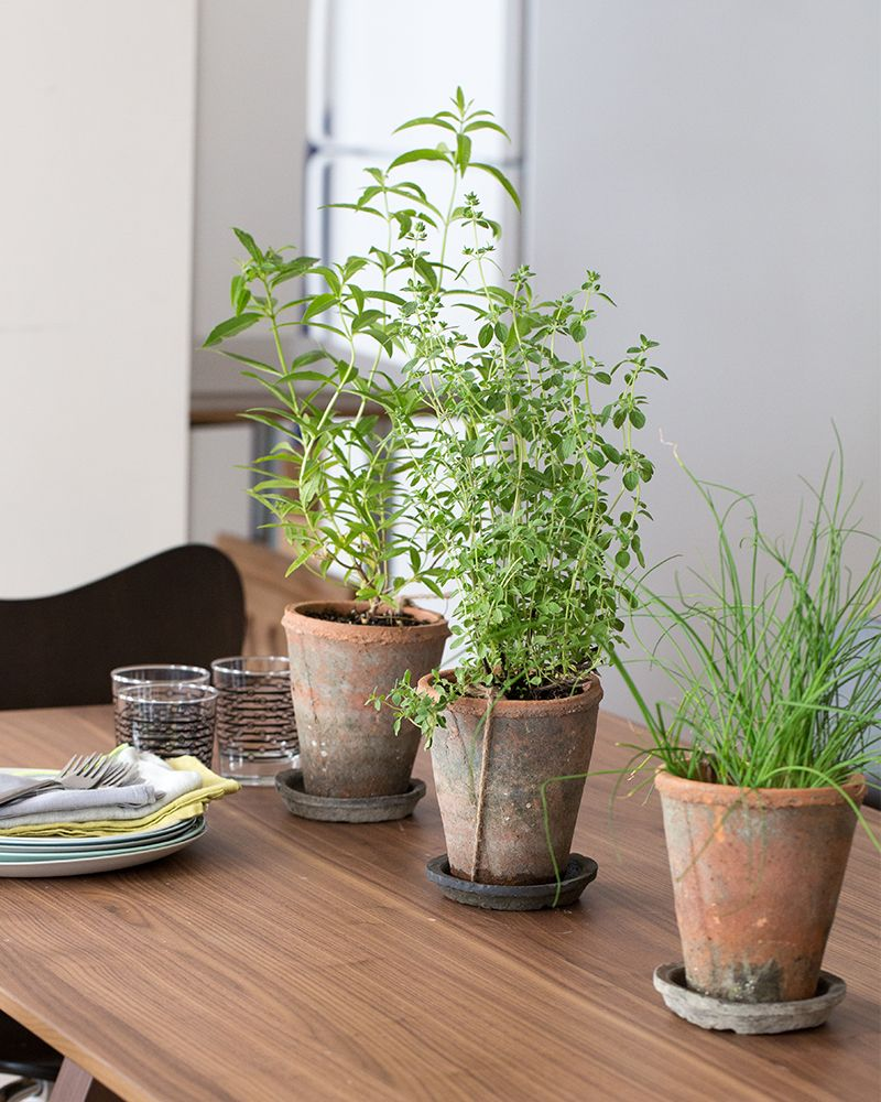 I Just Love The Idea Of Inside Herb Gardens!!! Edible Centerpieces | Blue