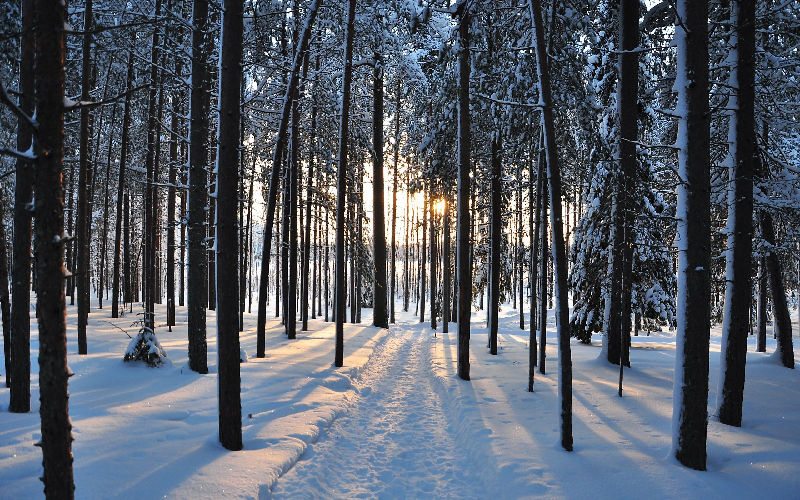 Winter Trees Forest Road Nature Landscape H Wallpaper Background Winter Trees Winter Forest Tree Forest