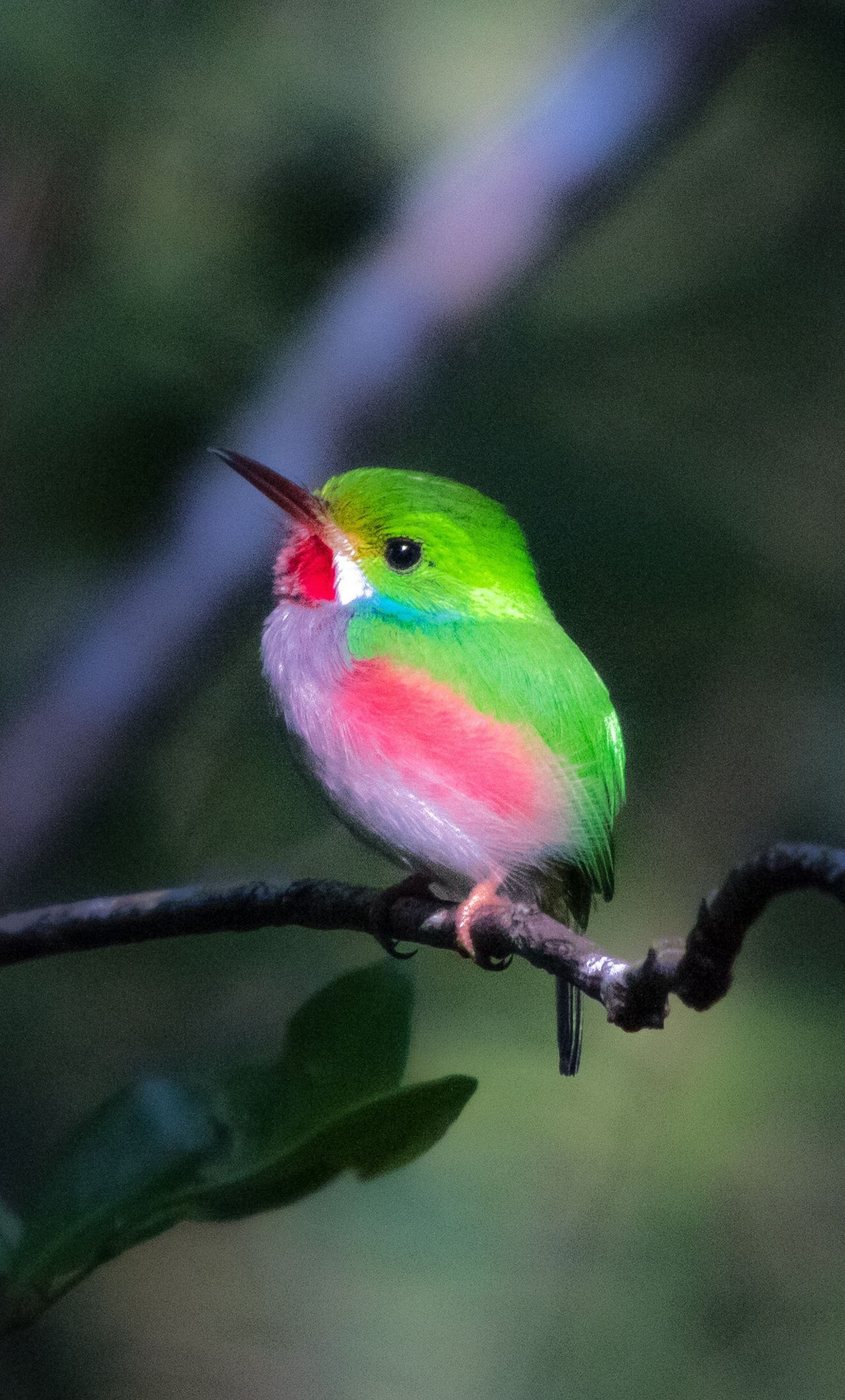 Small Cute Cuba Bird Portrait 1280x2120 Wallpaper Beautiful Birds Nature Birds Pretty Birds