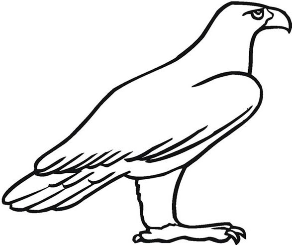The most amazing interesting golden eagle coloring page http coloring alifiah