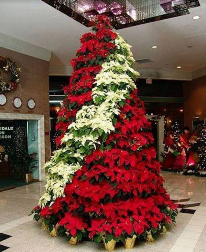 Red And White Poinsettia Tree Church Christmas Decorations Christmas Unique Christmas Trees