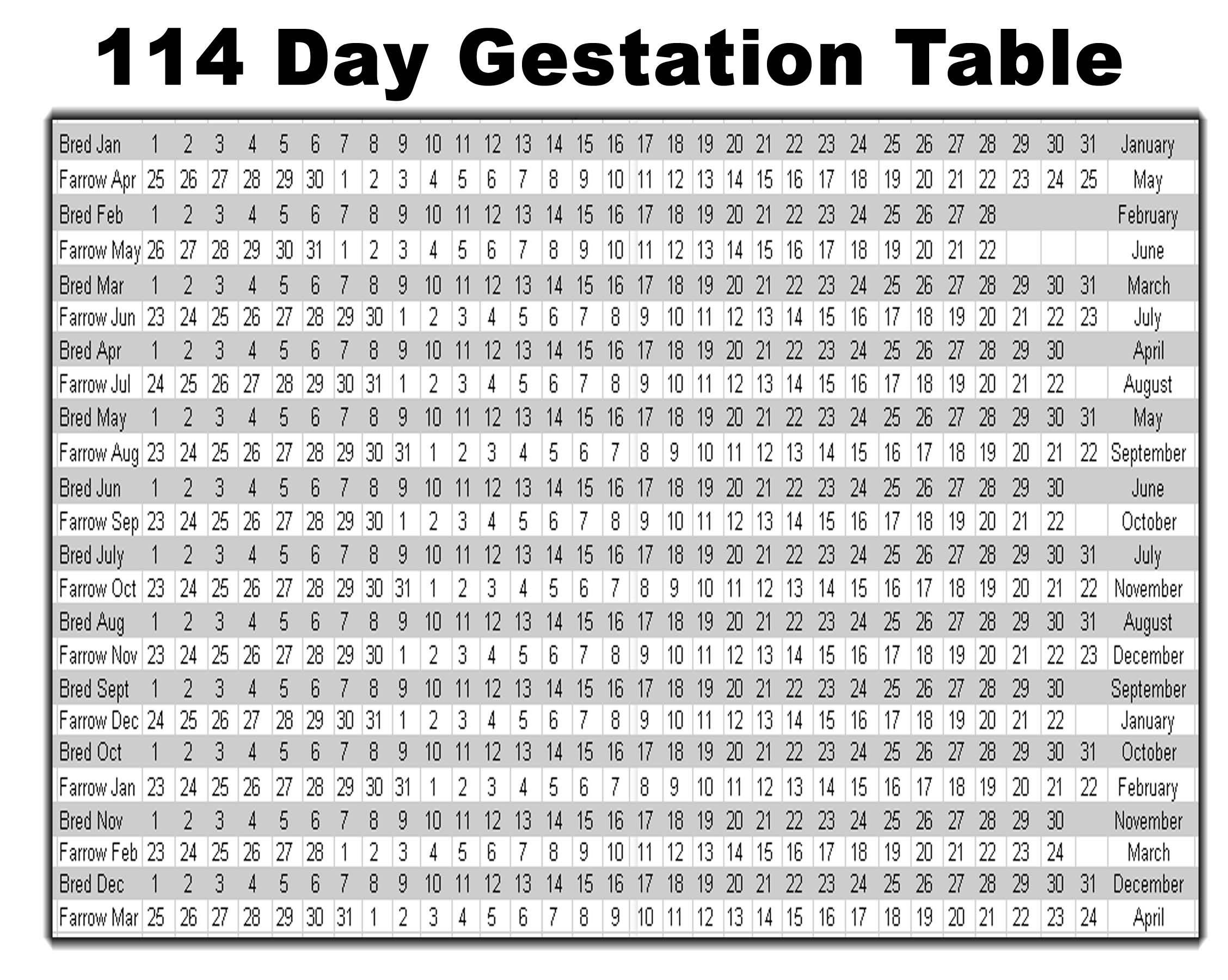 Swine/Pig Gestation Table source:www.triplesires.com ... - photo#8