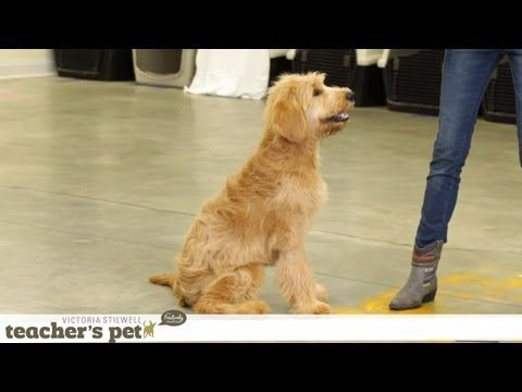 Prevent Your Dog From Food Guarding Teacher S Pet With