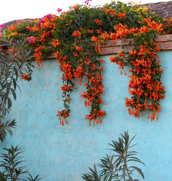The Best Types Of Honeysuckle Vines And How To Grow It In The Garden Gardening Home Decor Plant Wall Plants Creepers Plants