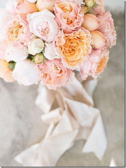1000 images about Garden Roses on Pinterest The ribbon