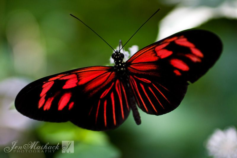 Pin by Diane Ayala on Rainforest Creatures   Butterfly meaning