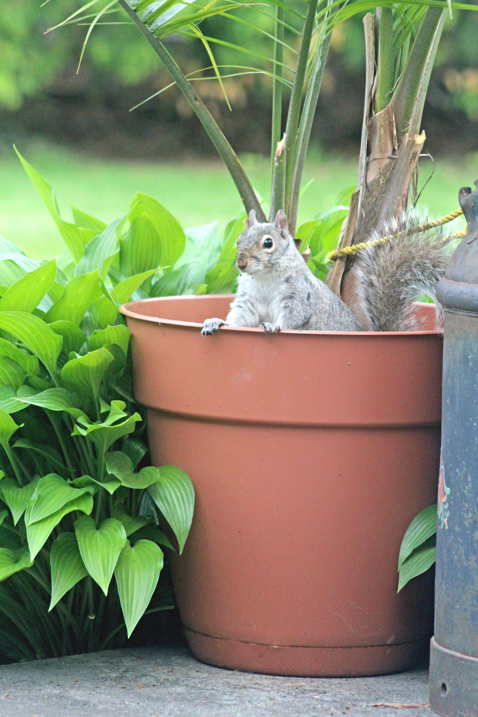 8e9096c4d6ccb0dadaa7cfcd5af040c8 - How To Get Rid Of Squirrels The Natural Way