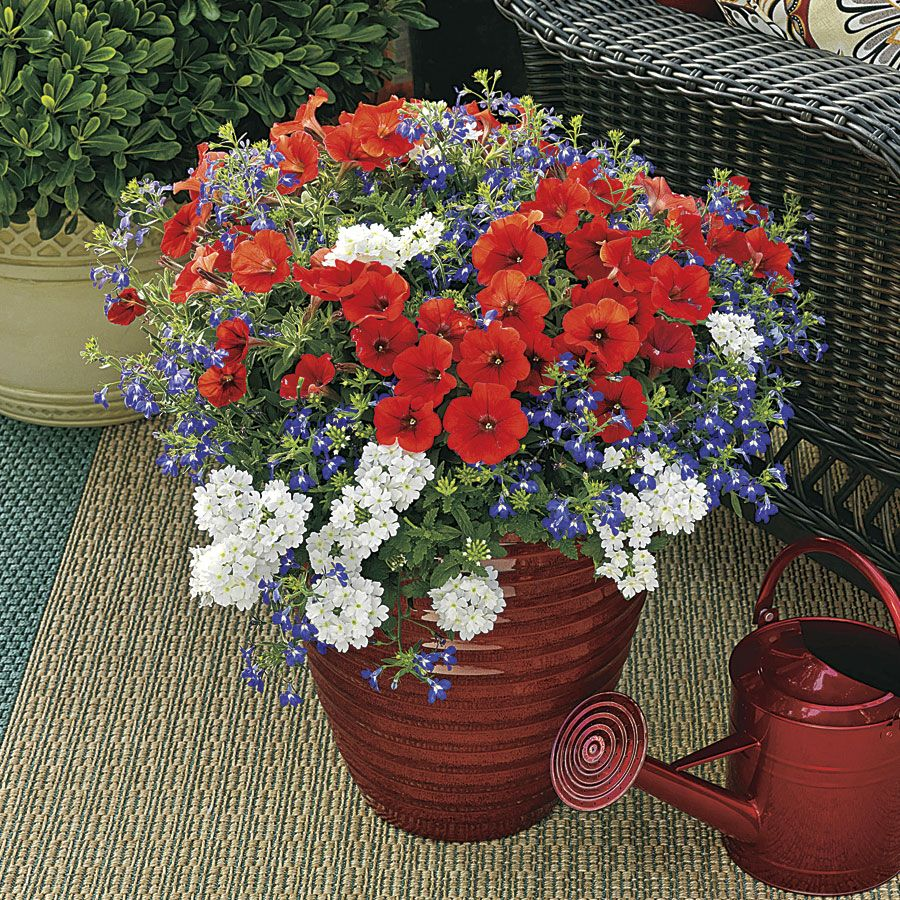 Spring Decorations Annual Plant Combination (pack Of 6