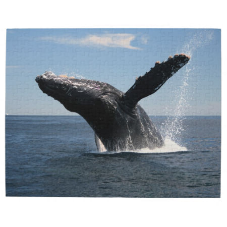 Adult Humpback Whale Breaching Jigsaw Puzzle | Zazzle.com